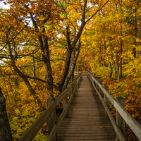 Wooden Walkway with trees and autumn leaves
