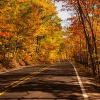 Autumn Forest corridor on the roadway