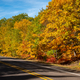 Roadside Autumn Leaves in the UP