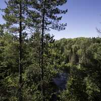 The forest and the Peshekee River at Van Riper State Park, Michigan
