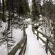 Walkway through the trees in the snow at Cascade River State Park, Minnesota