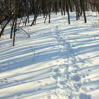Footprints in the snow at Glacial Lakes State Park, Minnesota