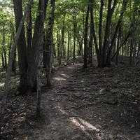 Forest Path with trees and shadows in Great River Bluffs State Park