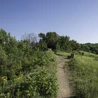 Hiking Path at the Top of King's Bluff at Great River State Park