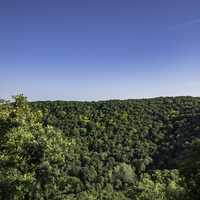 Trees of the Forest under the blue sky in Great River Bluffs State Park
