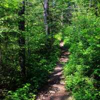 Hiking Trail to Eagle Mountain, Minnesota