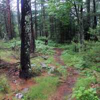 Hiking Path at Voyguers National Park