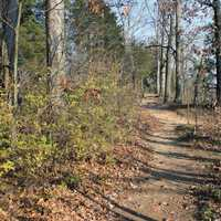 Forest Path at Castlewood State Park, Missouri