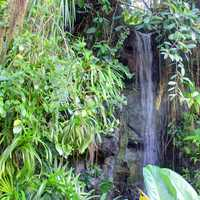 Waterfall in the Climatron in St. Louis, Missouri