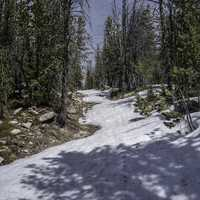 Snowy Hiking Trail with pine trees in the Elkhorn Mountains