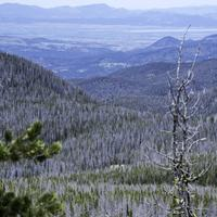Trees and Mountain Landscape forest at Elkhorn Mountains
