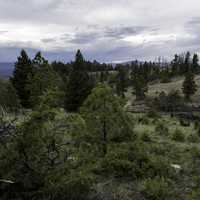 Forest Landscape with pine trees and trail in Helena, Montana