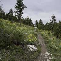Mount Ascension Hiking Trail in Helena