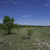 Landscape with grassland and tree in Montana