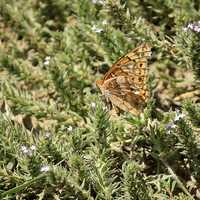 Butterfly at Panorama Point, Nebraska