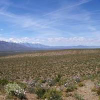 Desert and Grasses with mountains under skies