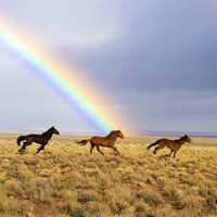 Horses Running Under the Rainbow