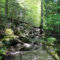 More trail at Adirondack Mountains, New York