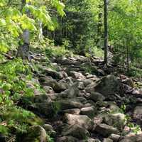 Pathway Up in Adirondack Mountains, New York