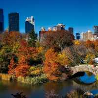 Landscape and trees in Central Park, New York City