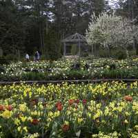 Flower terraces in Duke Gardens in Durham, North Carolina