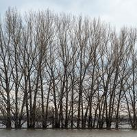 Trees on a flooded river