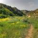 Hiking path through the grass at Theodore Roosevelt National Park, North Dakota