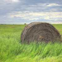 Hay Barrel on the fields at White Butte, North Dakota