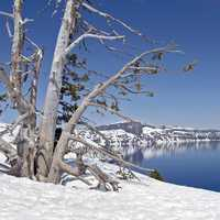 Winter Scenery at Crater Lake National Park, Oregon