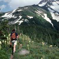 Hiking in Mount Hood National Forest