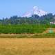 Mount Hood as seen from Molalla Forest Road in Canby, Oregon