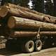 Pine Logs on a truck in Burns, Oregon