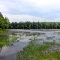 Wetlands at Promised Land State Park, Pennsylvania
