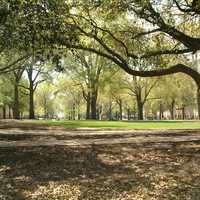 The horseshoe at the University of South Carolina in Columbia