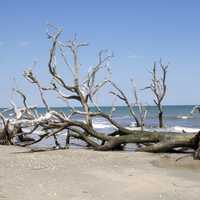 Landscape and Beach in Edisto Island in South Carolina