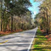 Road and Landscape in South Carolina