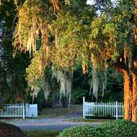 Trees and Fence in South Carolina
