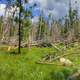 Blown down trees in Custer State Park, South Dakota