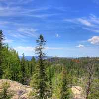 Trees and forest under the skies in Custer State Park, South Dakota