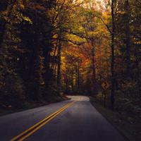 Roadway under trees in the fall at Great Smoky Mountains National Park, Tennessee