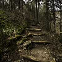 Steps on the Appalachian Trail leading to Clingman's Dome in Great Smoky Mountains National Park, Tennessee