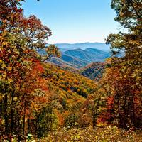 Trees and landscape in Autumn in Great Smoky Mountains National Park, Tennessee