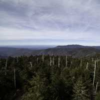 Trees and mountaintops landscape at Clingman's Dome, Tennessee