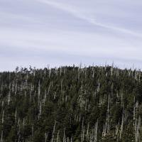Trees in the landscape in Great Smoky Mountains National Park, Tennessee