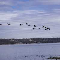 Geese flying over Pickwick Lake