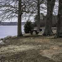 Trees, bench. and shoreline of Pickwick Lake