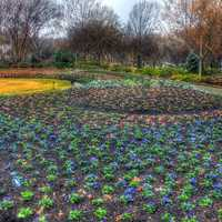 Flower Bed in Dallas, Texas