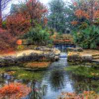 Pond Landscape in Garden in Dallas, Texas