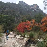 Green and Red Trees hiking in Guadalupe Mountains National Park