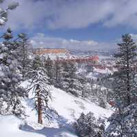 Fir Forests landscape in Bryce Canyon National Park, Utah